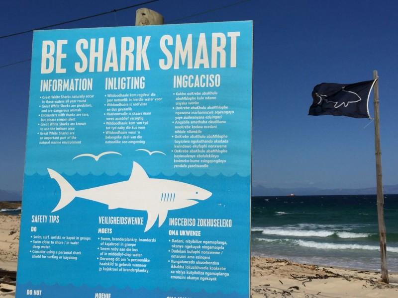 Be Shark Smart